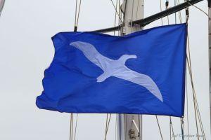 ofo flag